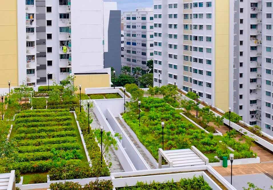 Saiba como montar uma horta comunitária em seu condomínio