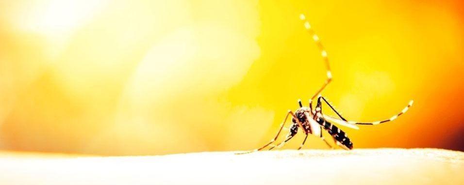 Afaste a dengue do seu condomínio
